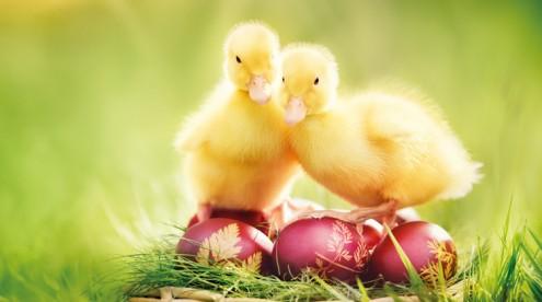Wertvolle Münzen zu Ostern