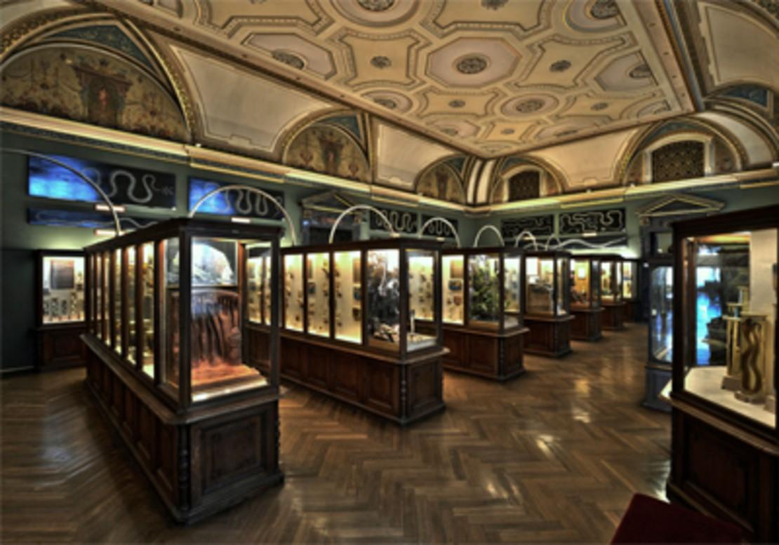 Sammlung des Naturhistorischen Museum Wien