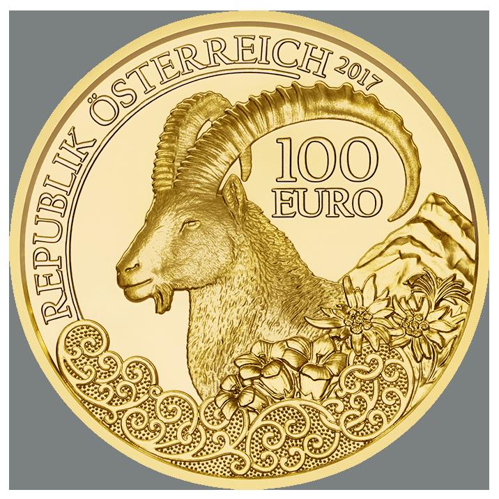 wildlife, alpine ibex